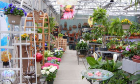 Houseplant Greenhouse on floral greenhouse, botany greenhouse, snow greenhouse, outdoor greenhouse, bonsai greenhouse, gardening greenhouse, white greenhouse, horticulture greenhouse, conservatory greenhouse, tree greenhouse, green greenhouse, indoor greenhouse, vegetable greenhouse, plants greenhouse, spring greenhouse, weed greenhouse, tropical greenhouse, container greenhouse, nursery greenhouse, home greenhouse,